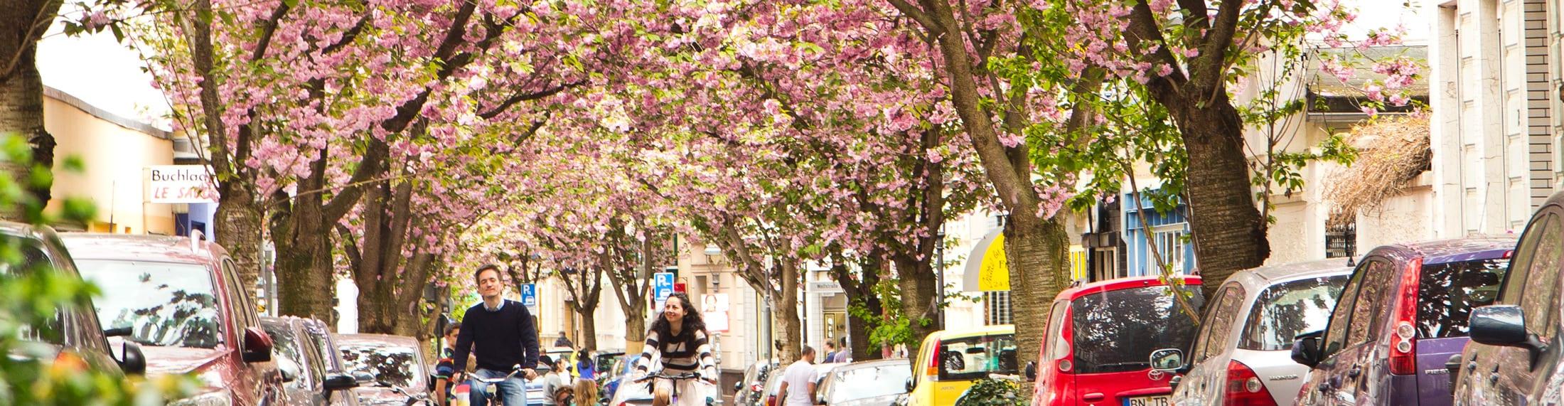 Blüten & Fahrräder